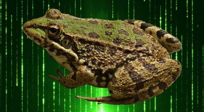 Frog_Ransomware-.jpg