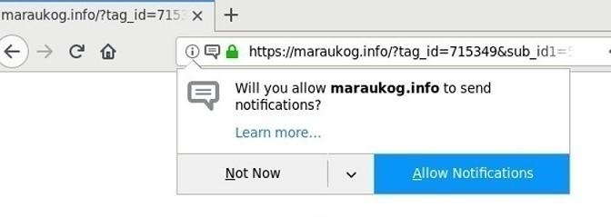 Maraukog.info-_8.jpg