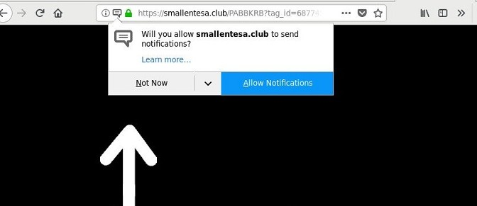 Smallentesa.club-_.jpg