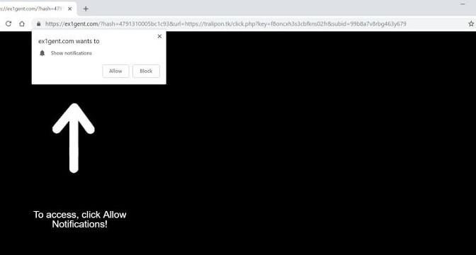 Ex1gent.com-_.jpg