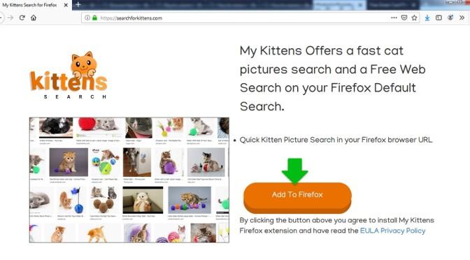 Searchforkittens.com-_.jpg